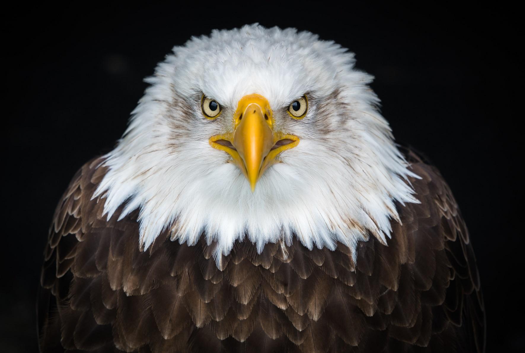 A Propriedade Privada depende do Estado para Existir? | Universidade Libertária